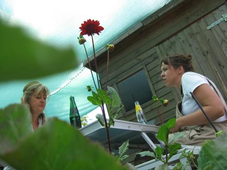 foto: Gert-Jan Gerlach  7 aug,  In gesprek met beeldend kunstenaar Kerry Morrison,  www.morrison-prowse.com