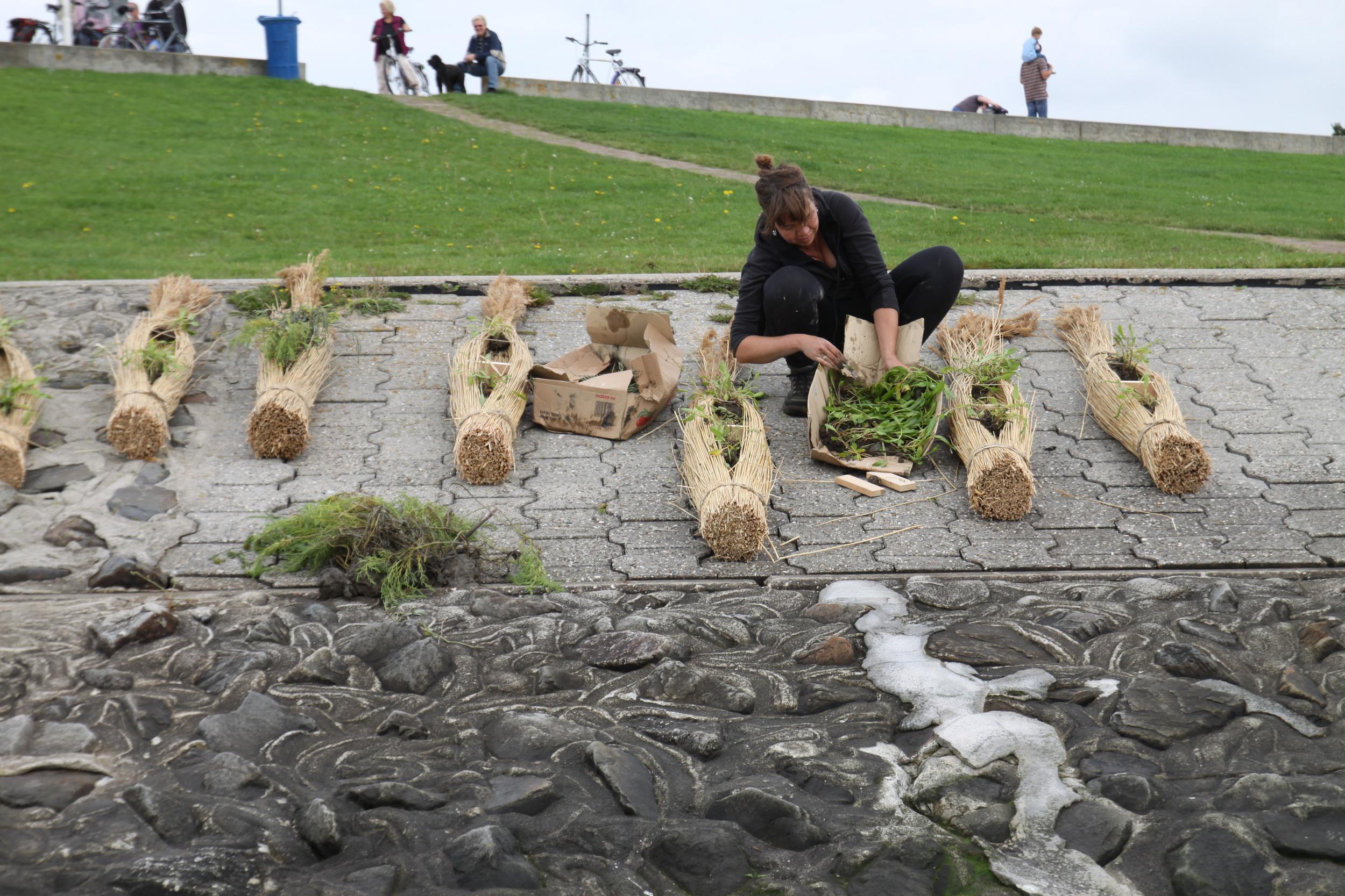 Ik maakte samen met studenten een serie van 13 drijftillen, drijvende eilandjes waar verschillende zilte plantensoorten in geplant werden.