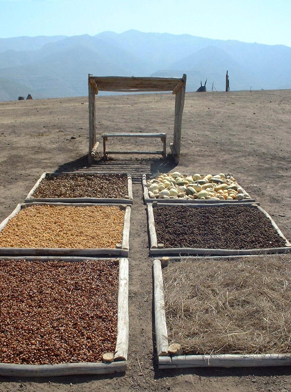 De 'Rust en Verzamelplaats' bestaat uit zes vierkanten gevuld met oorspronkelijke gewassen. De zes vakken vormen samen de agrarische geschiedenis van de plek.