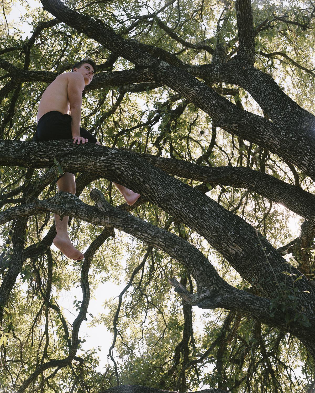 henry tree.jpg