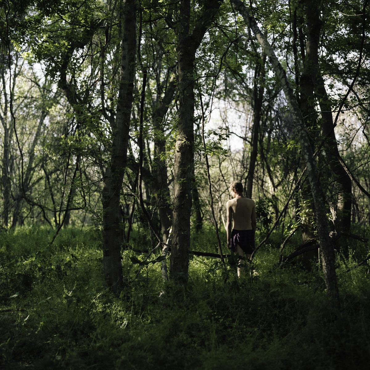 Stephen Thompson's Island forest-2.jpg