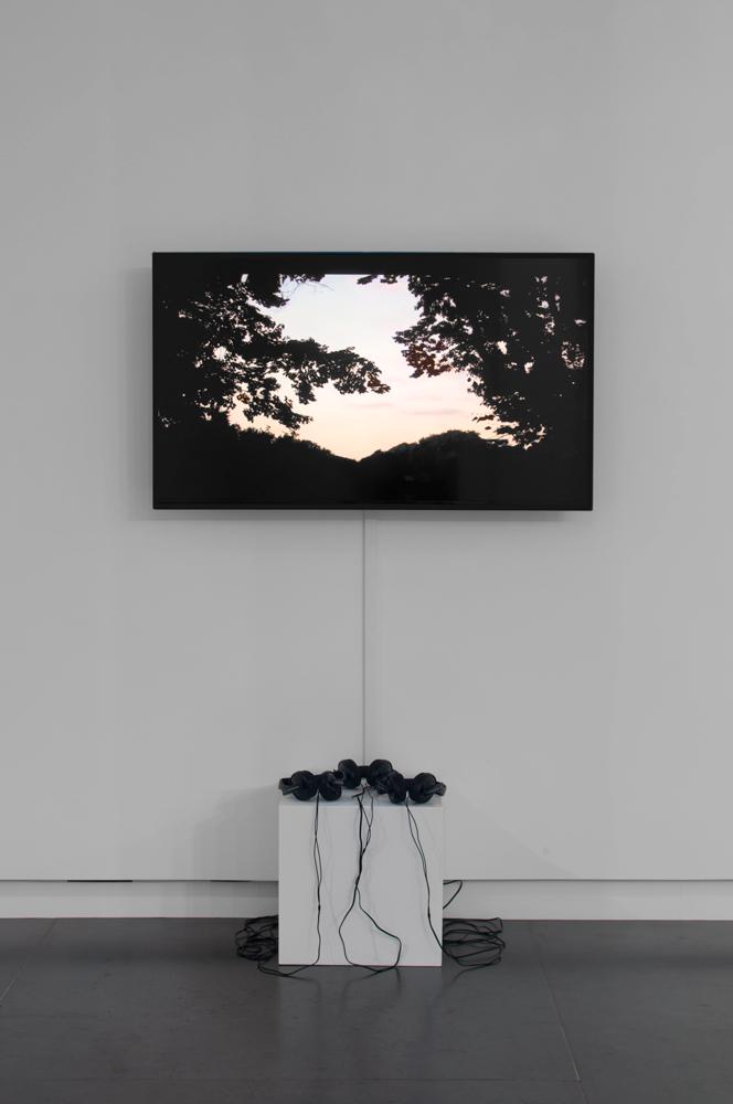 Brenna Murphy  Fernface Algorithm , 2014 (installation view) digital video, total run time 0:01:31