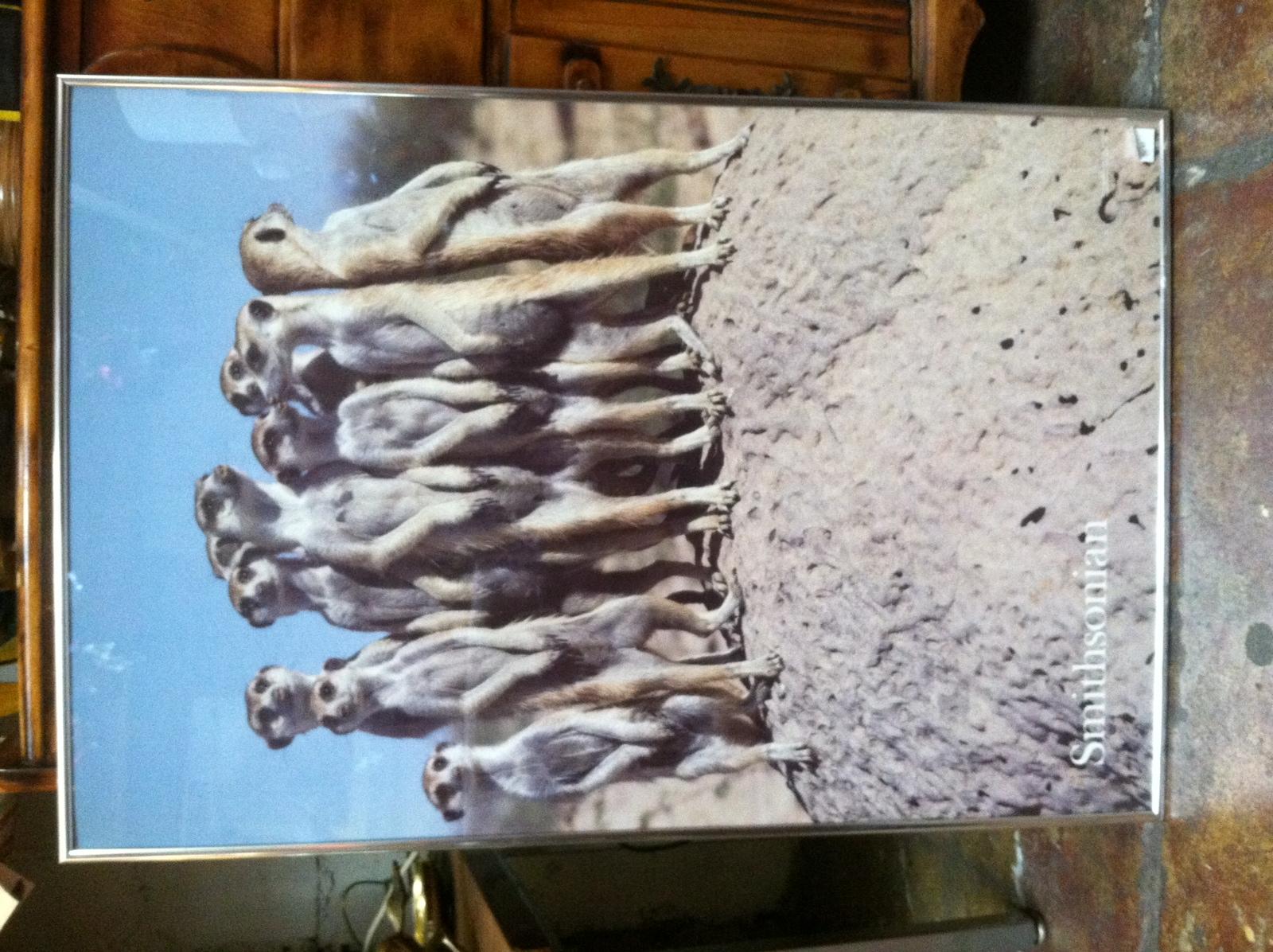 prairie dog print