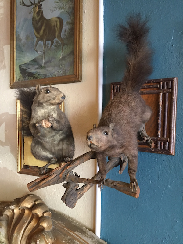 Squirrel Taxidermy Sculpture