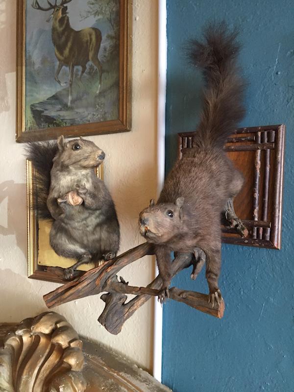1960s Taxidermy Squirrel