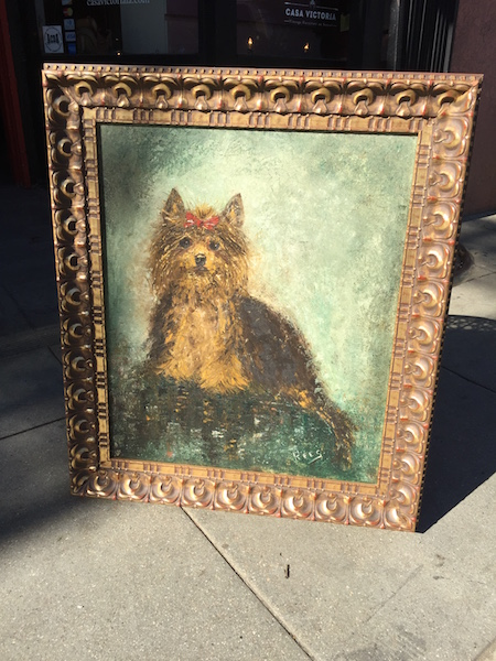 Mid-century Portrait of a Yorkshire Terrier Dog