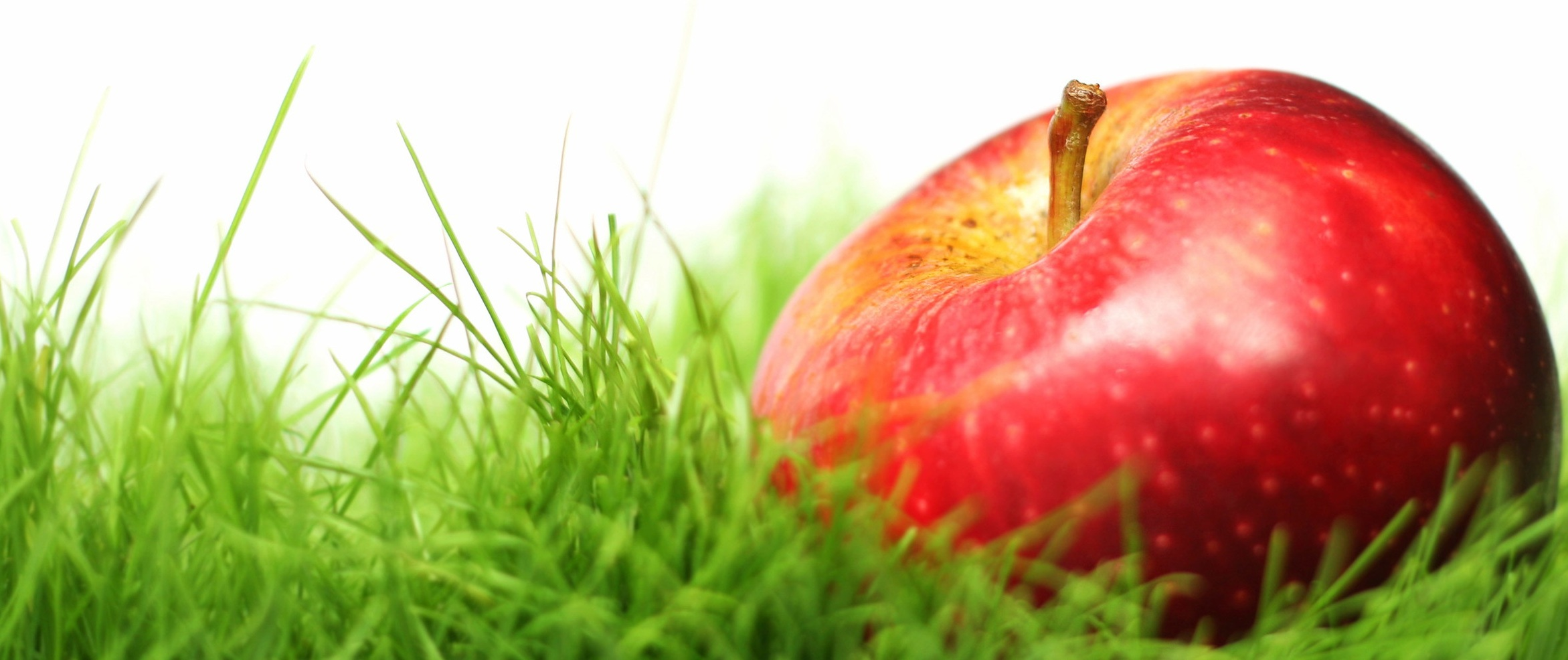 apple-in-grass.jpg