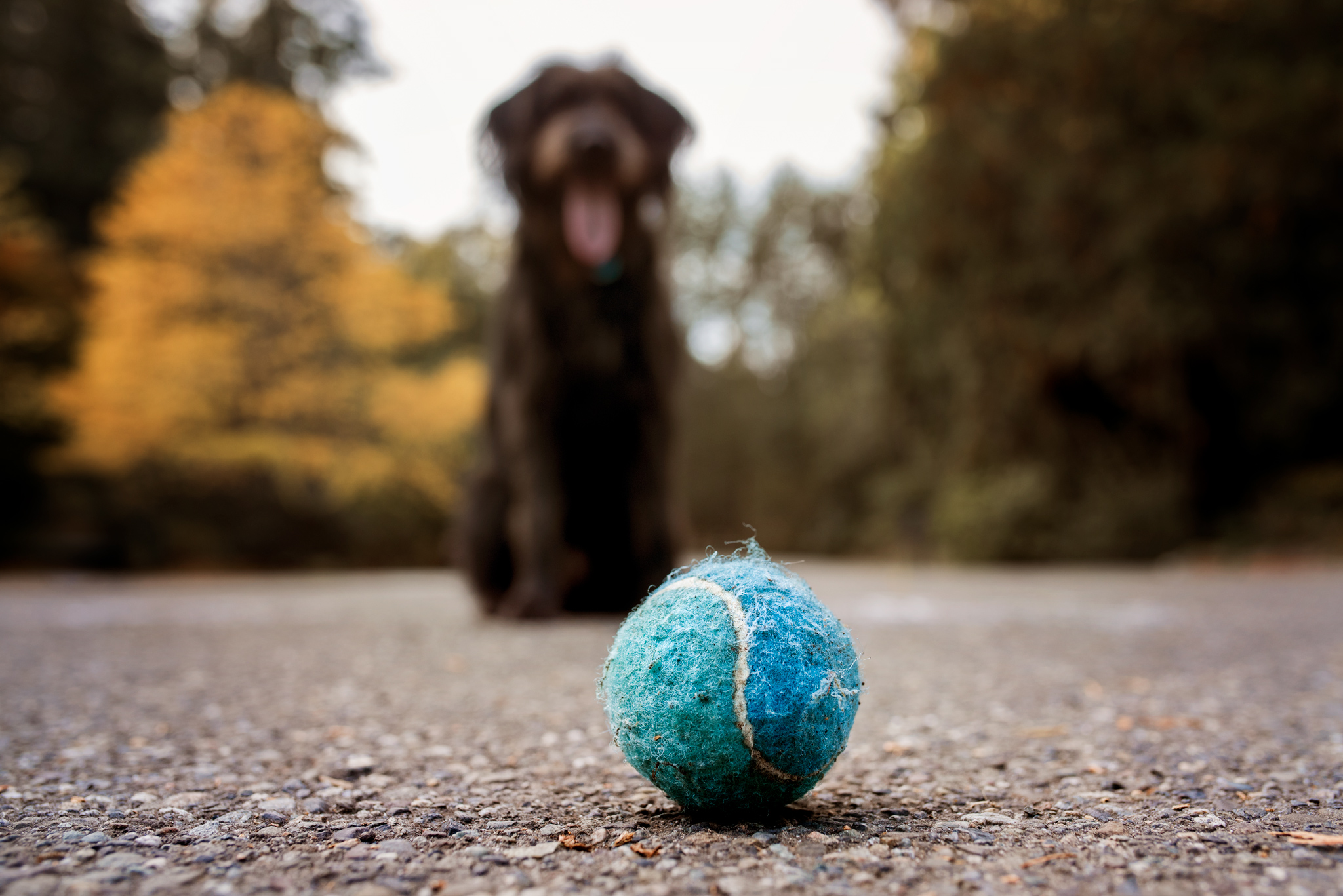 day 16 {a dog and her ball}