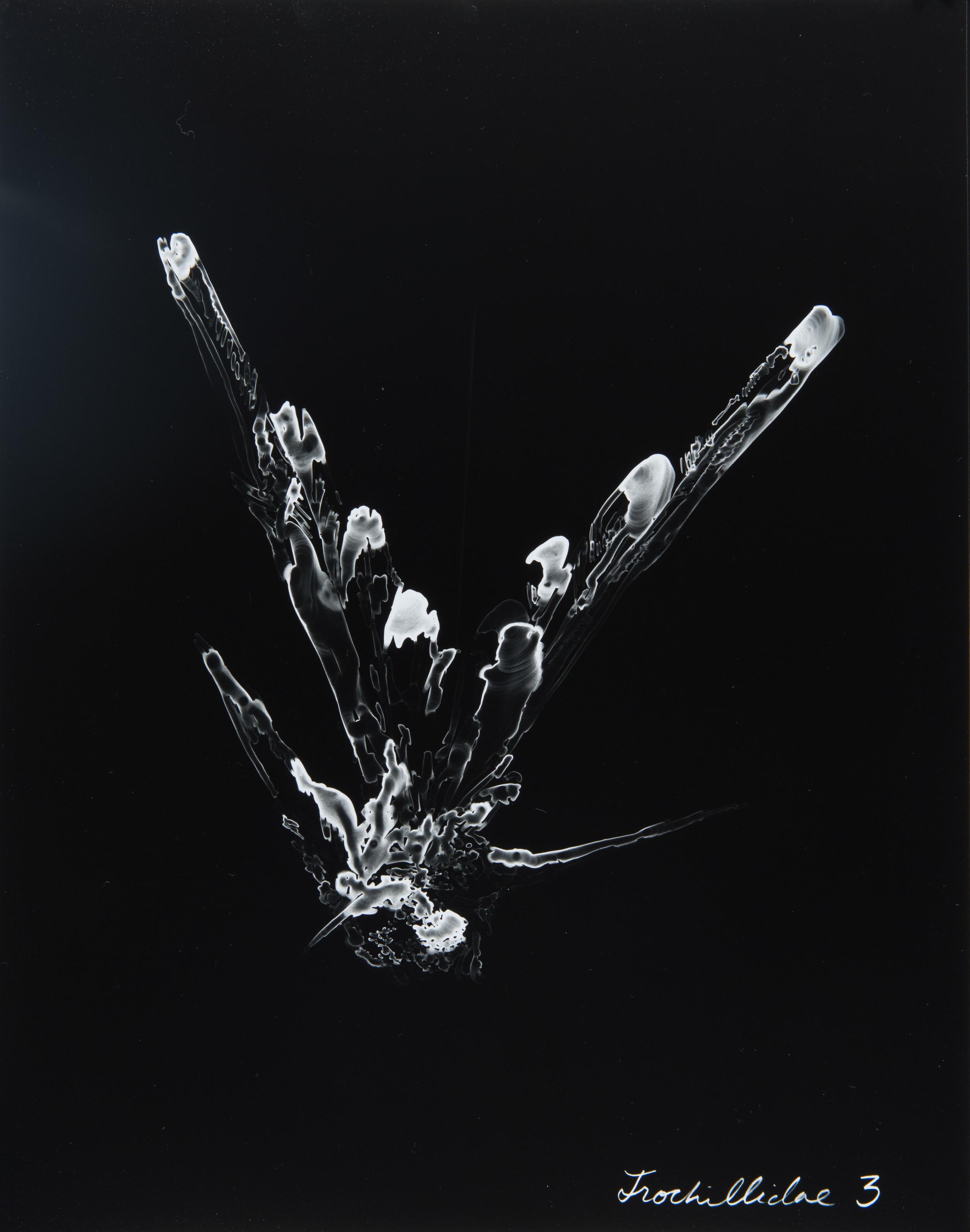 Trochillidae 3  2013 Cliché-verre print, 14 x 11 inches