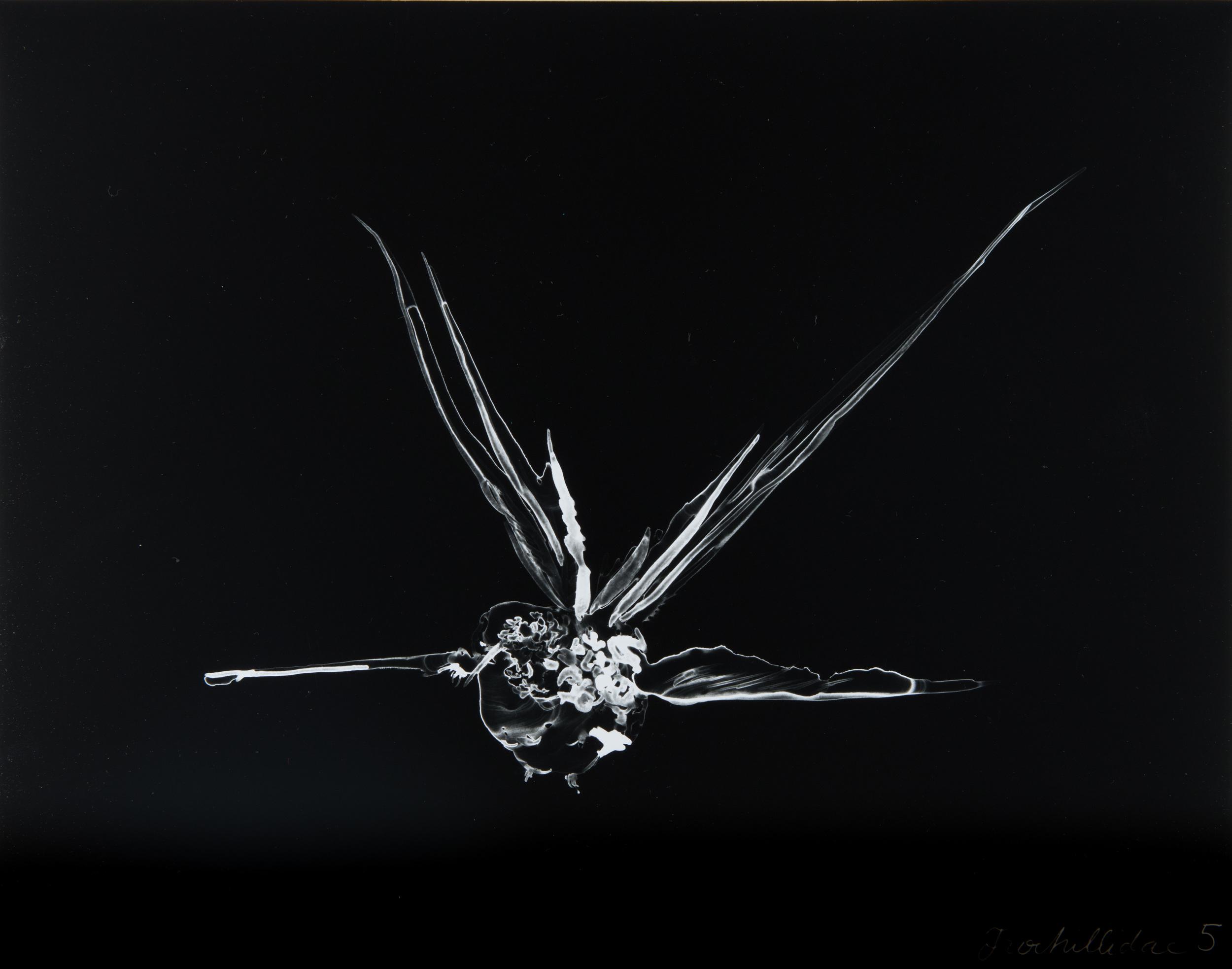 Trochillidae 5  2013 Cliché-verre print, 14 x 11 inches