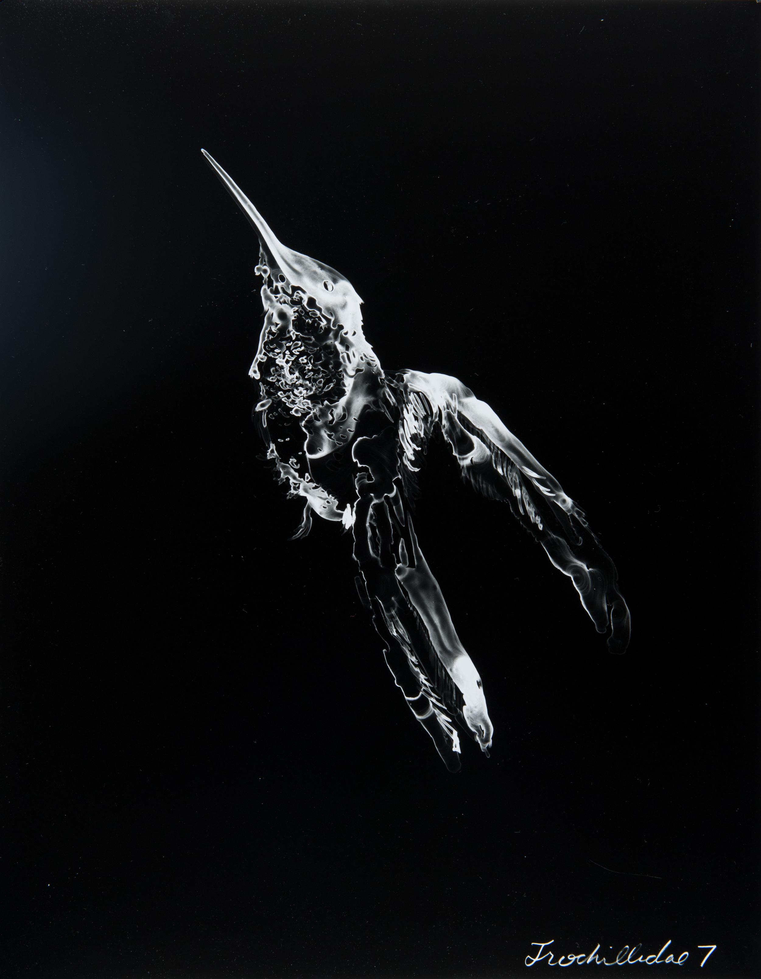 Trochillidae 7  2013 Cliché-verre print, 14 x 11 inches
