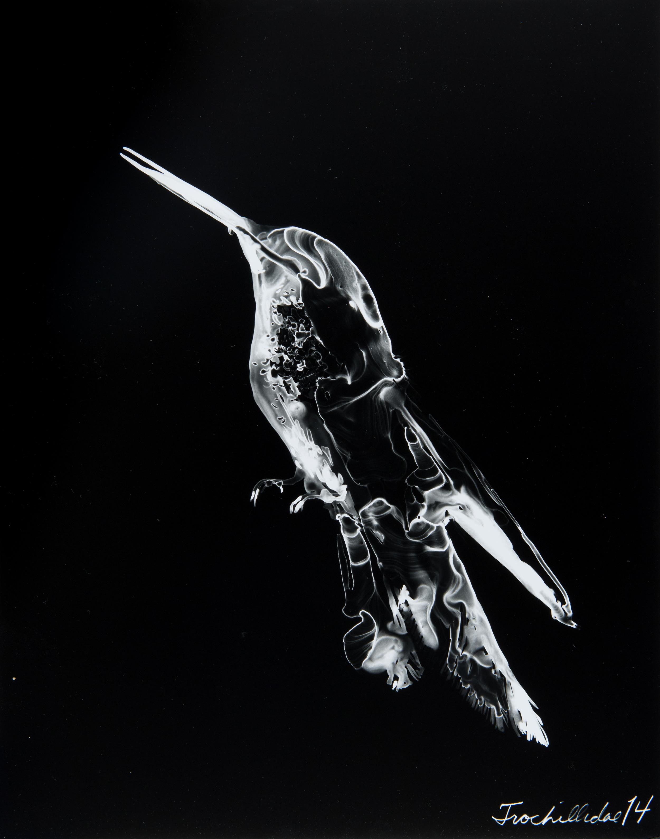 Trochillidae 14  2013 Cliché-verre print, 14 x 11 inches
