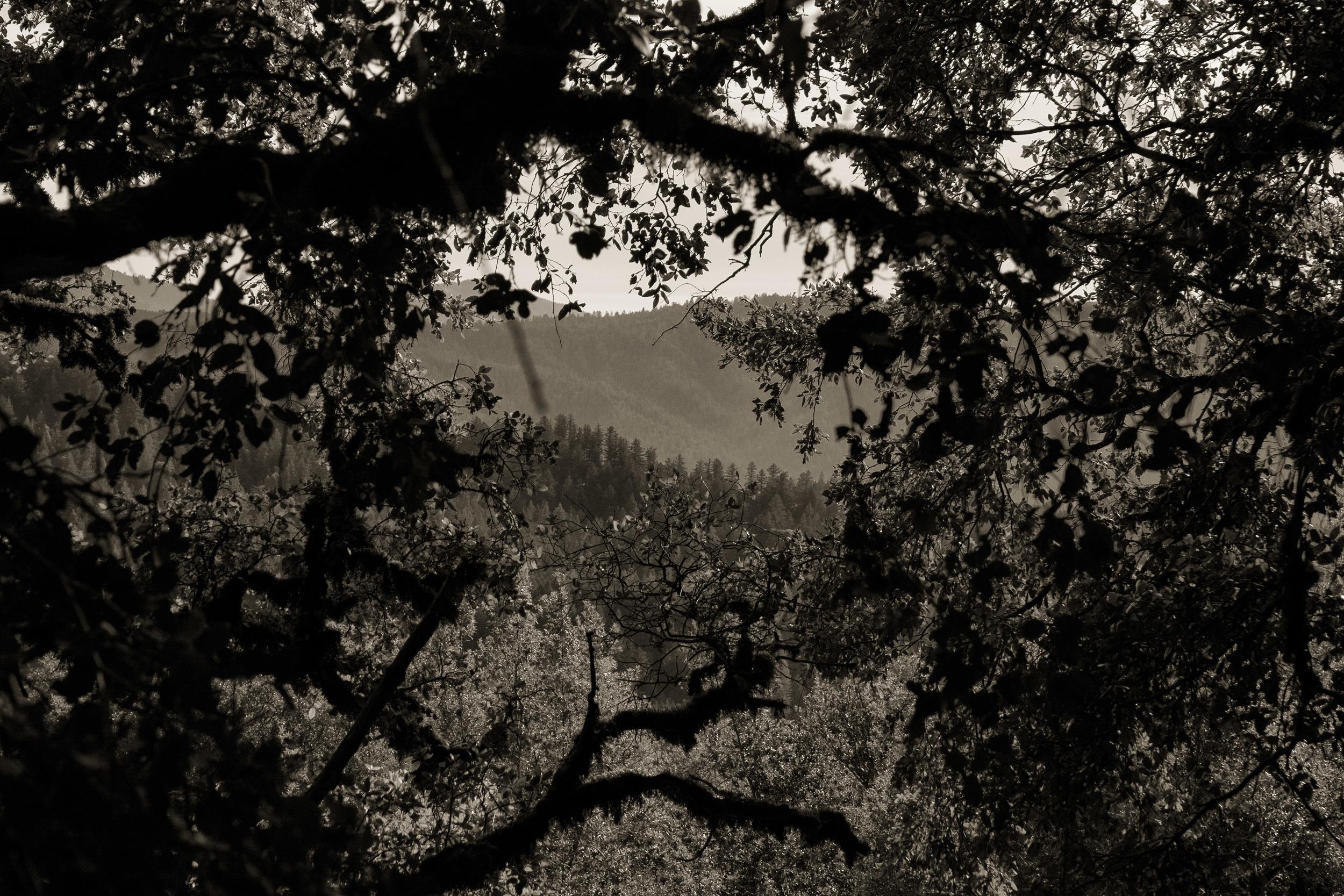 IMG_1925-Edit.jpg