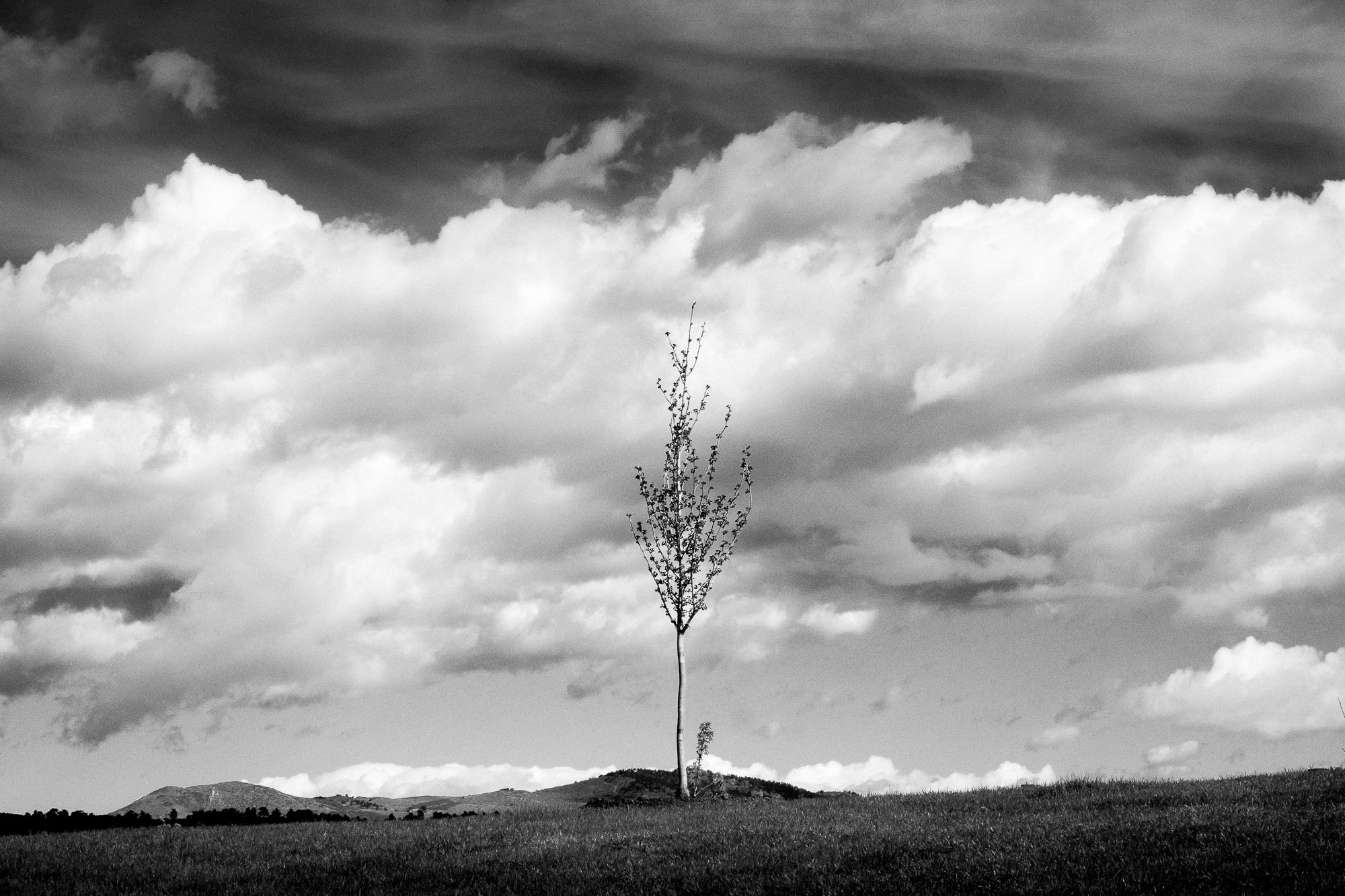 Eric Sean Rawson ,  Single Tree  (photograph)