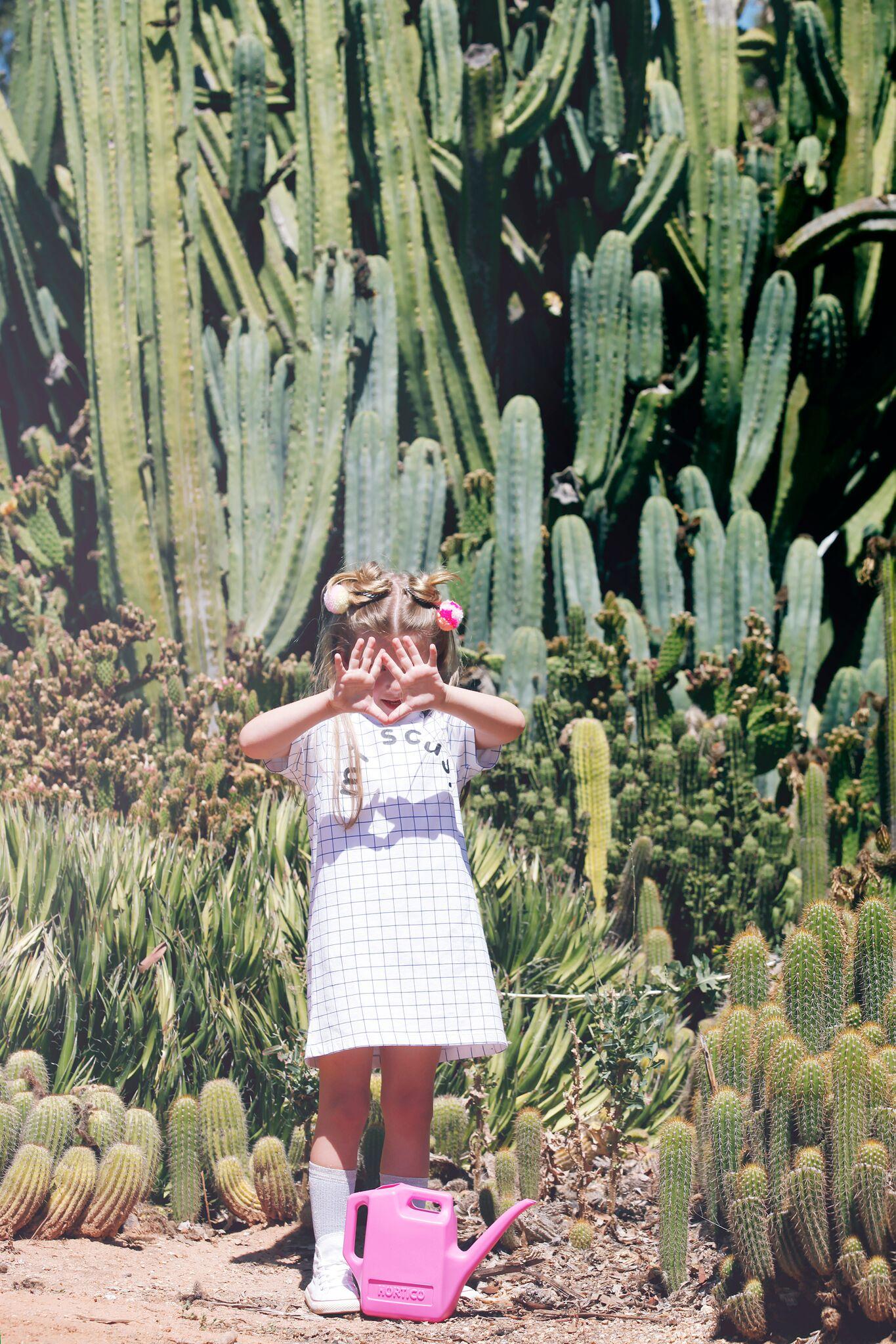 Cactus_496B68_preview.jpeg