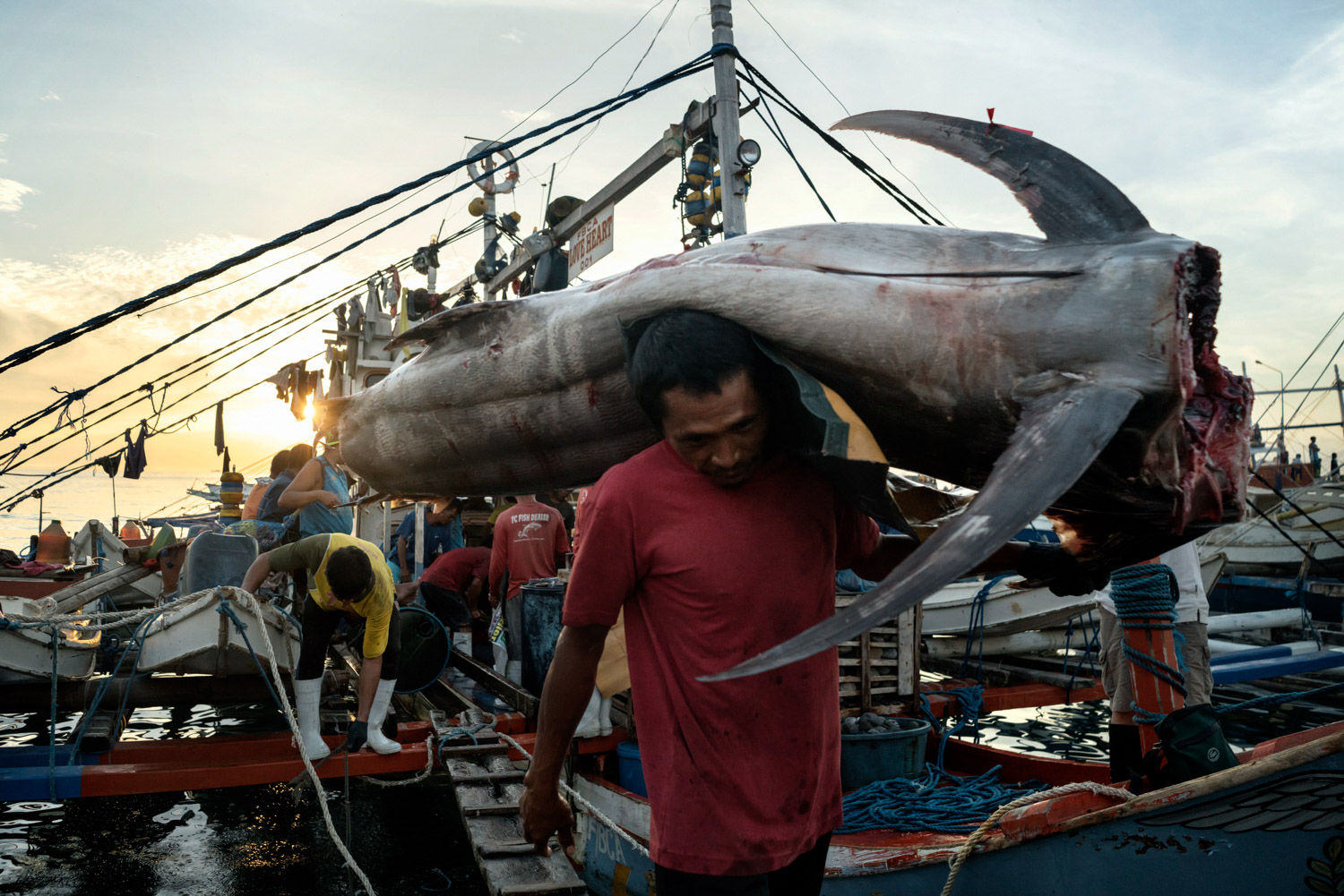 """Fisherman offload a marlin caught in the South China Sea,  at the General Santos Fish Port in General Santos, The Philippines on July 2nd, 2016. General Santos City is the largest producer of sashimi-grade tuna in the Philippines and is known as the """"Tuna Capital of the Philippines""""."""