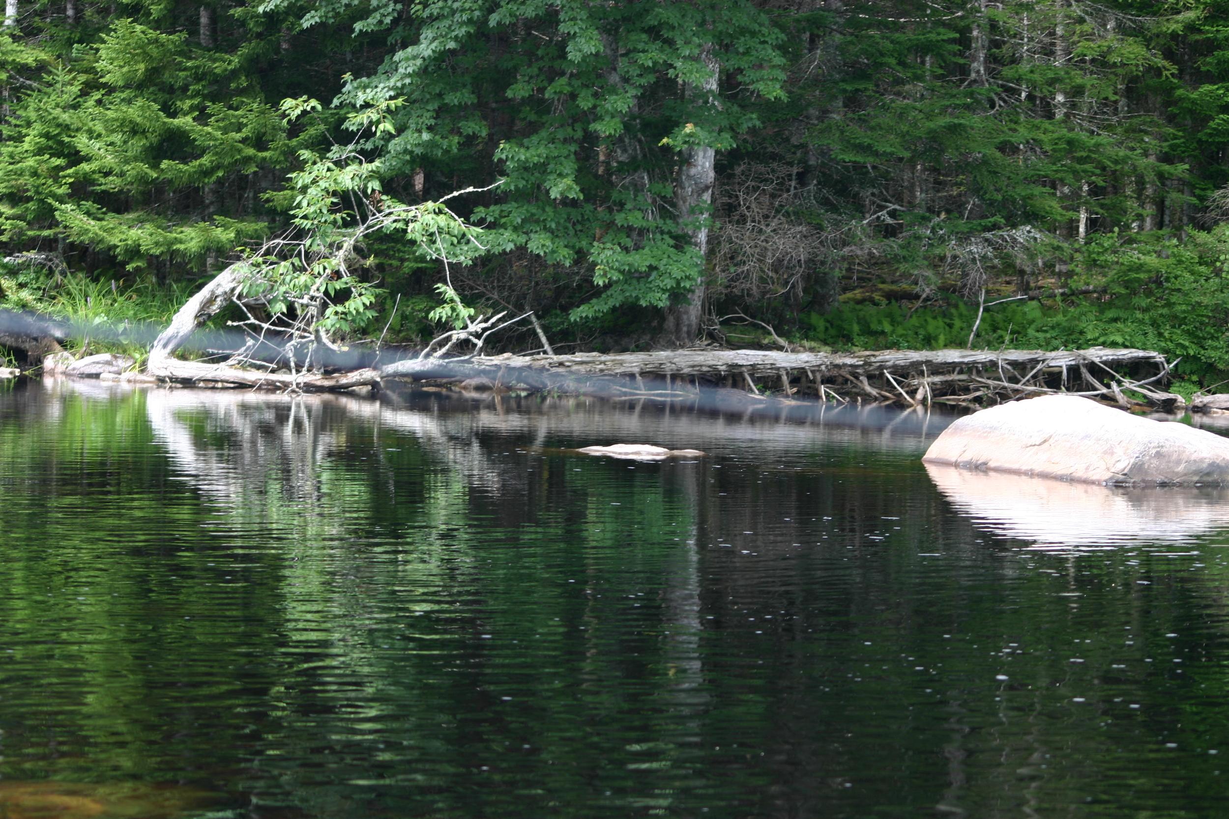 Gator Driftwood