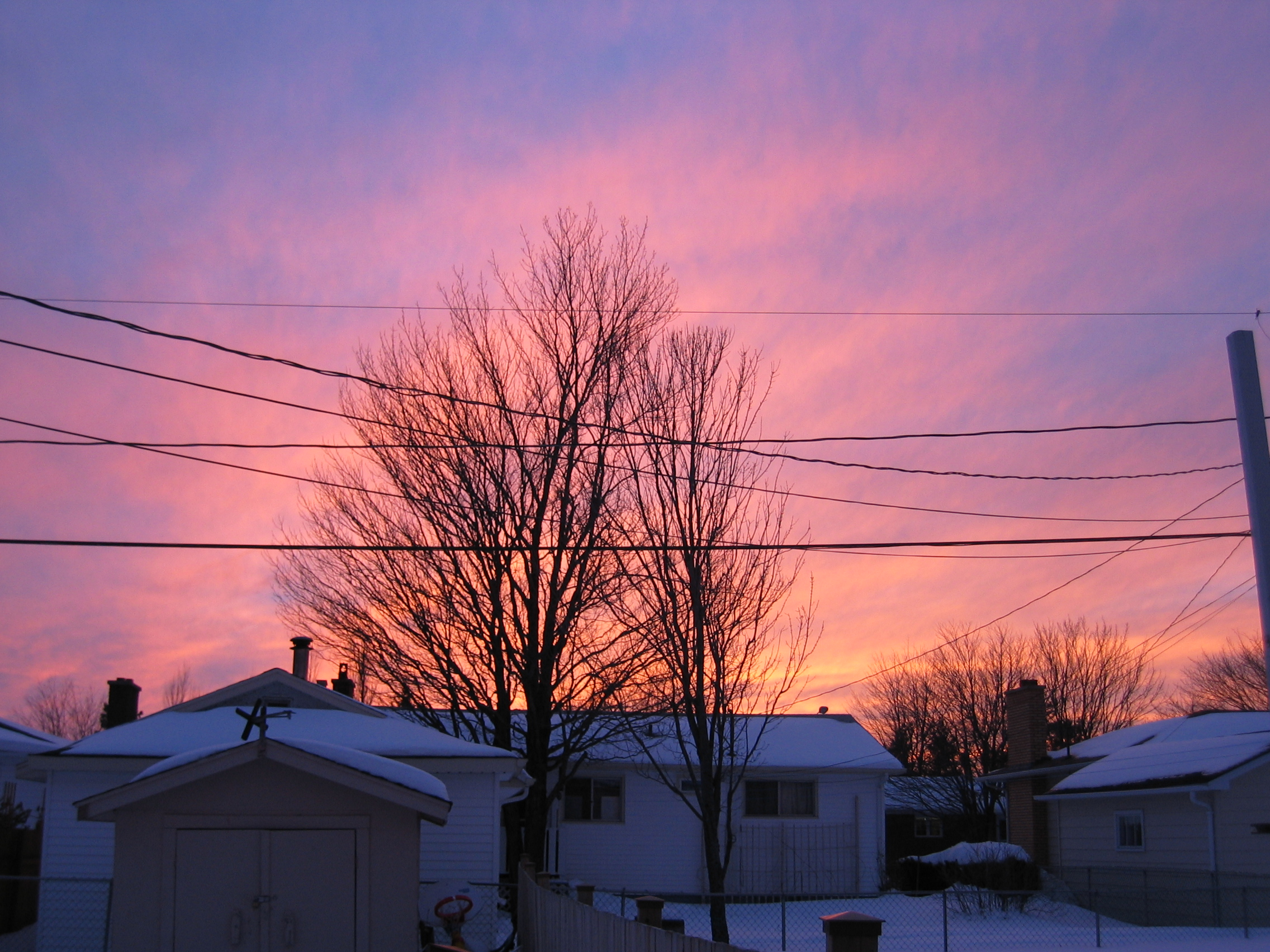 Sunset Fire Tree