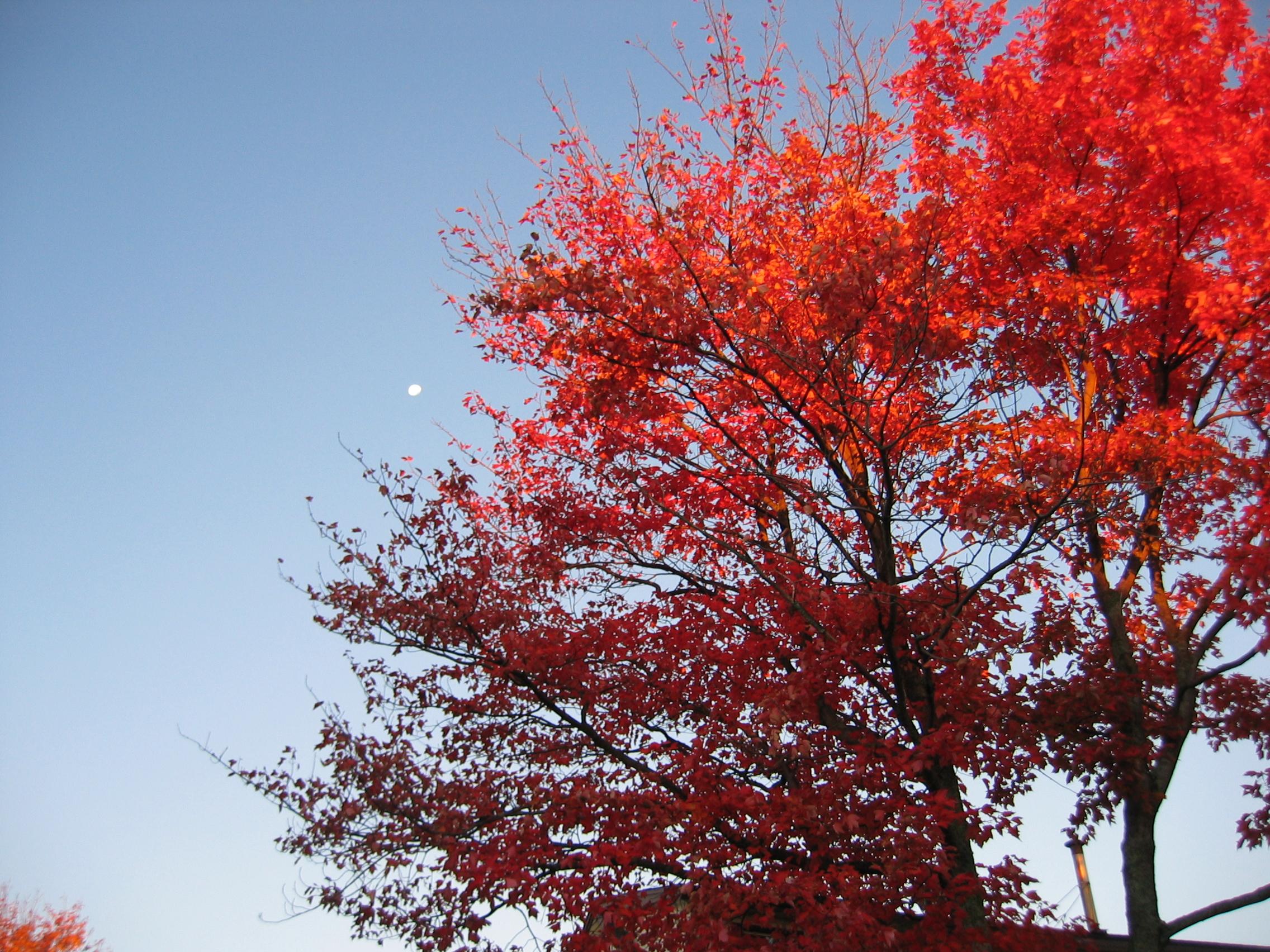 Sun Moon Lit Tree