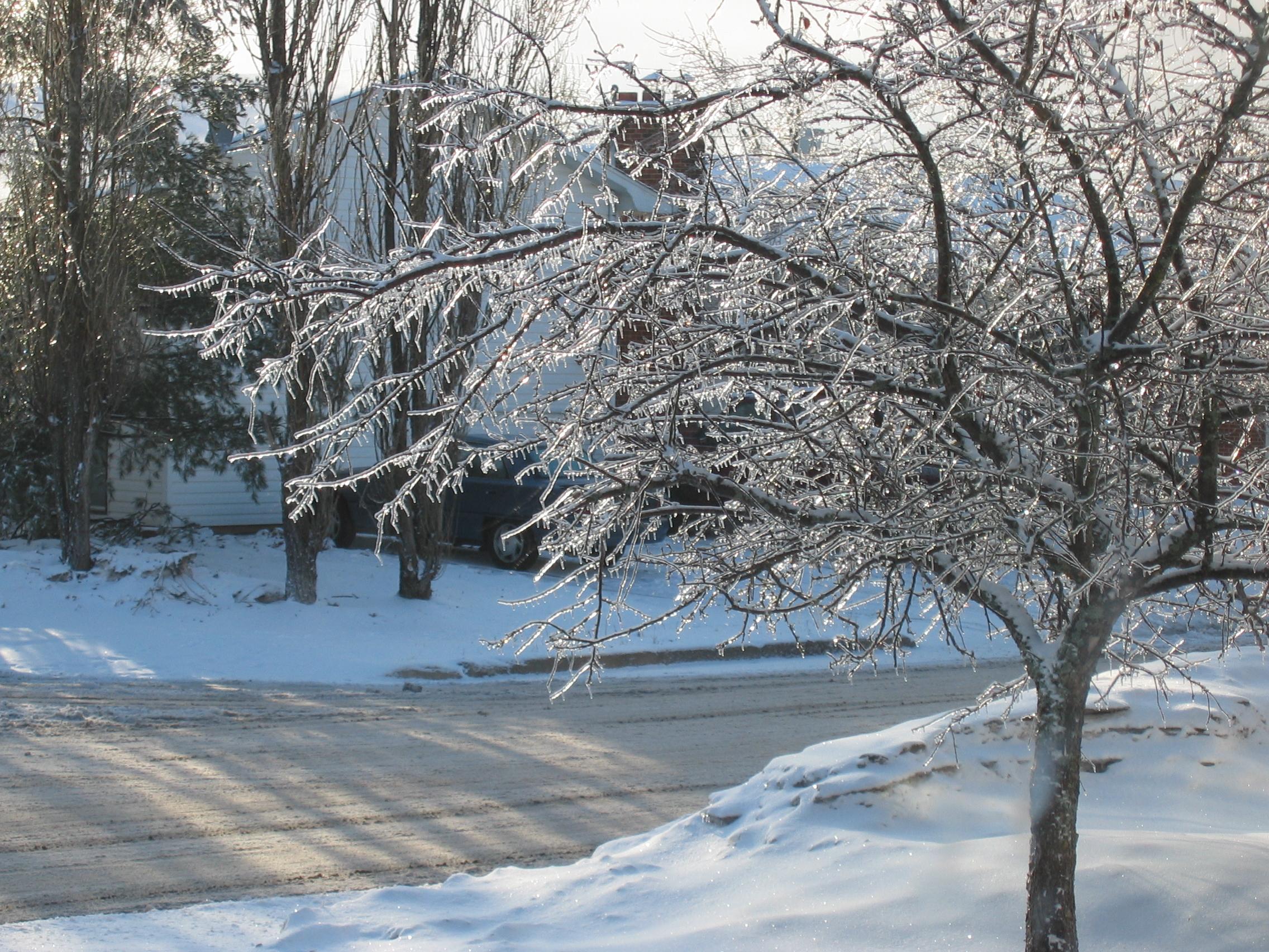 Ice Crab Tree