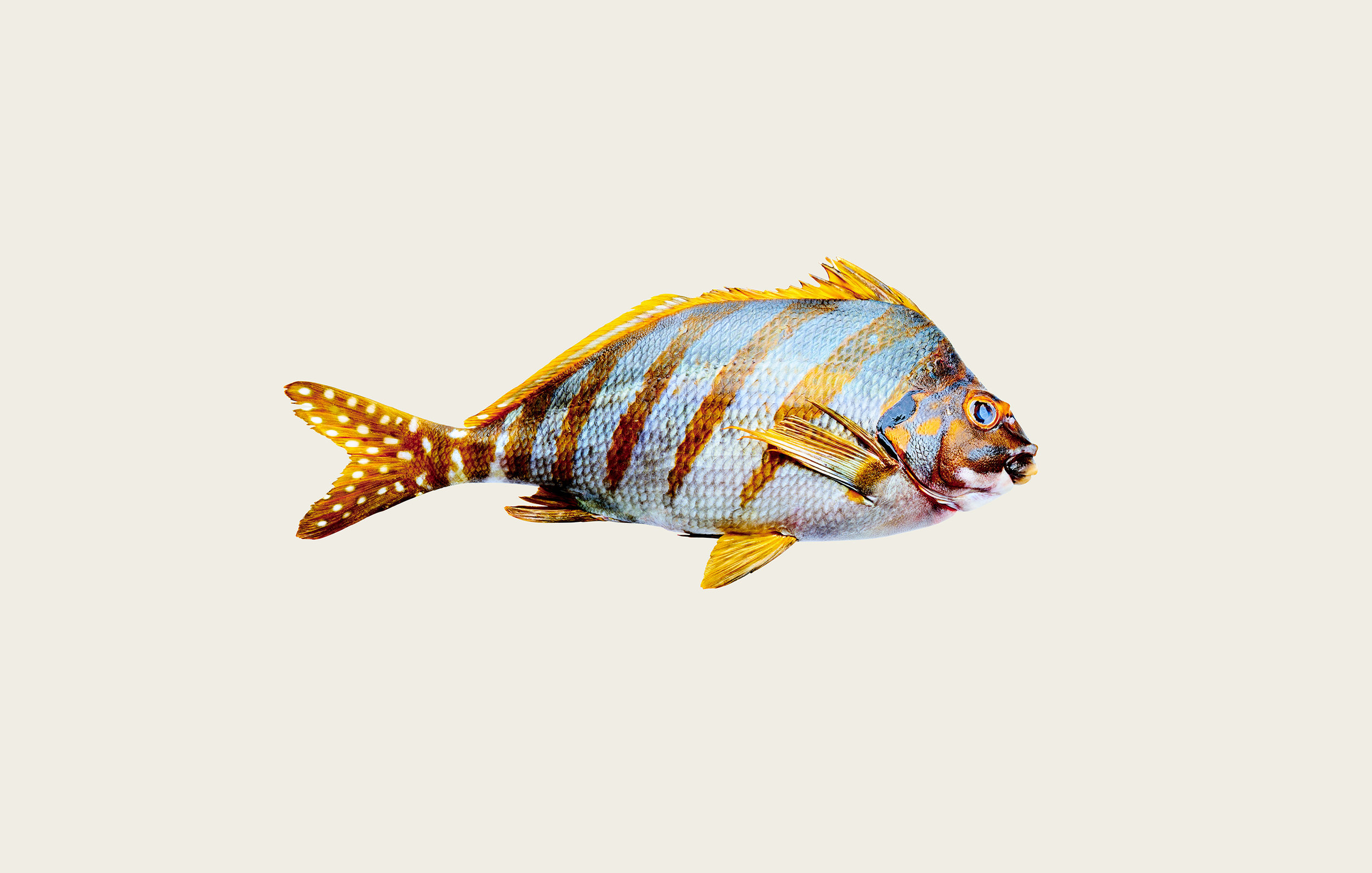Fish-07.jpg