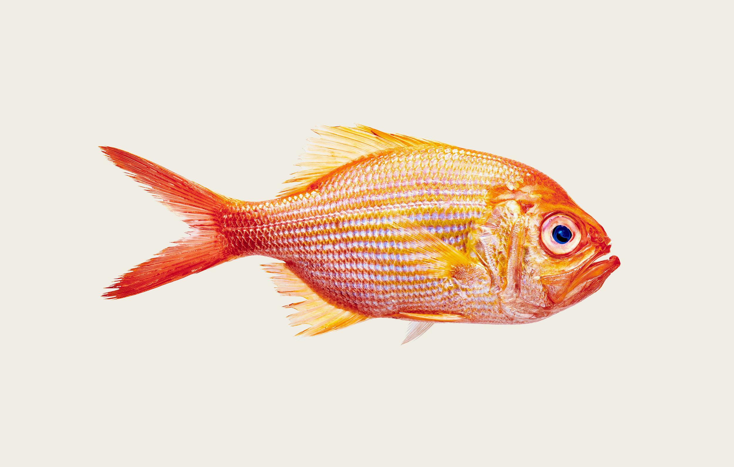 Fish-09.jpg