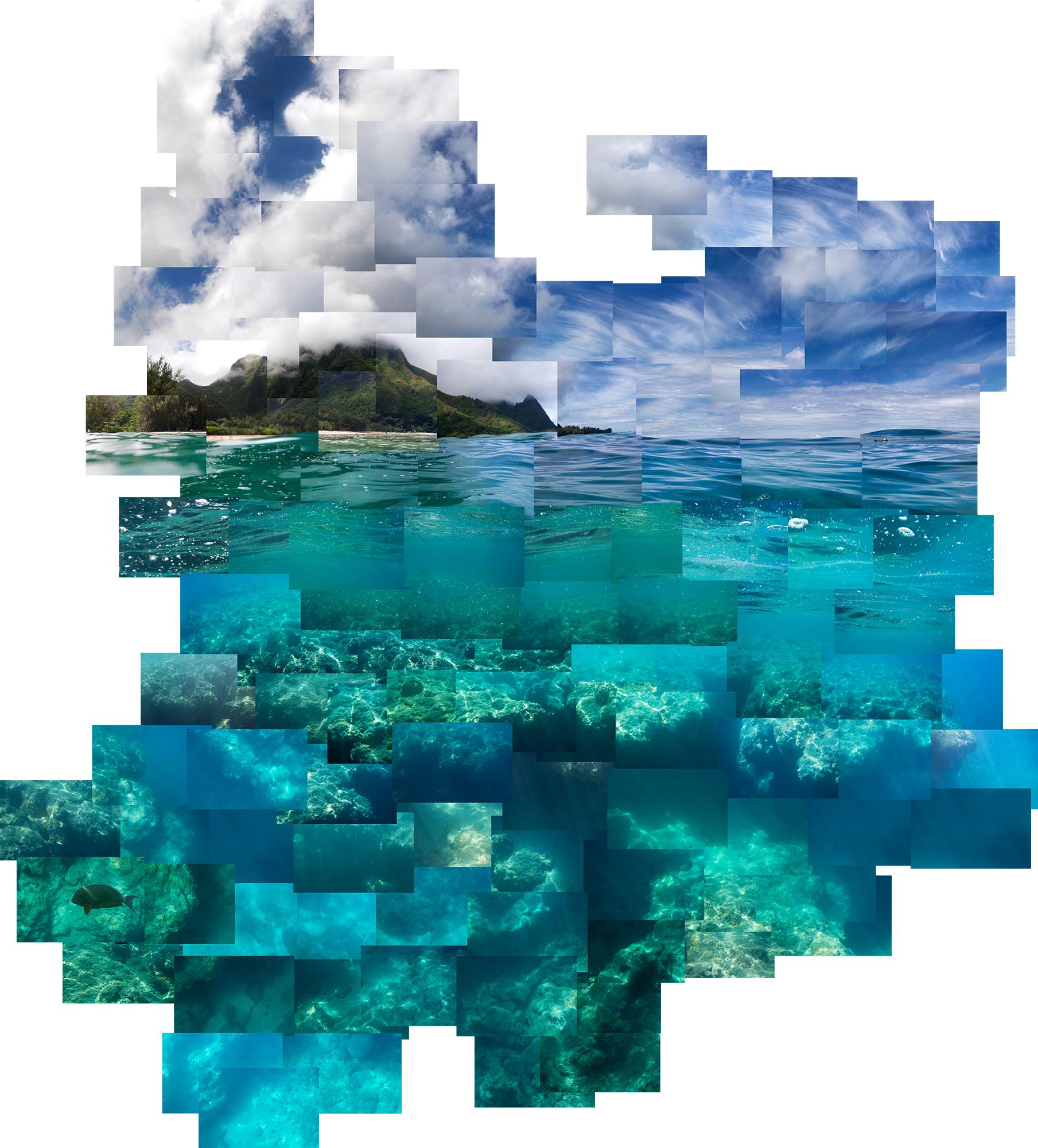 Reef Life copy.jpg
