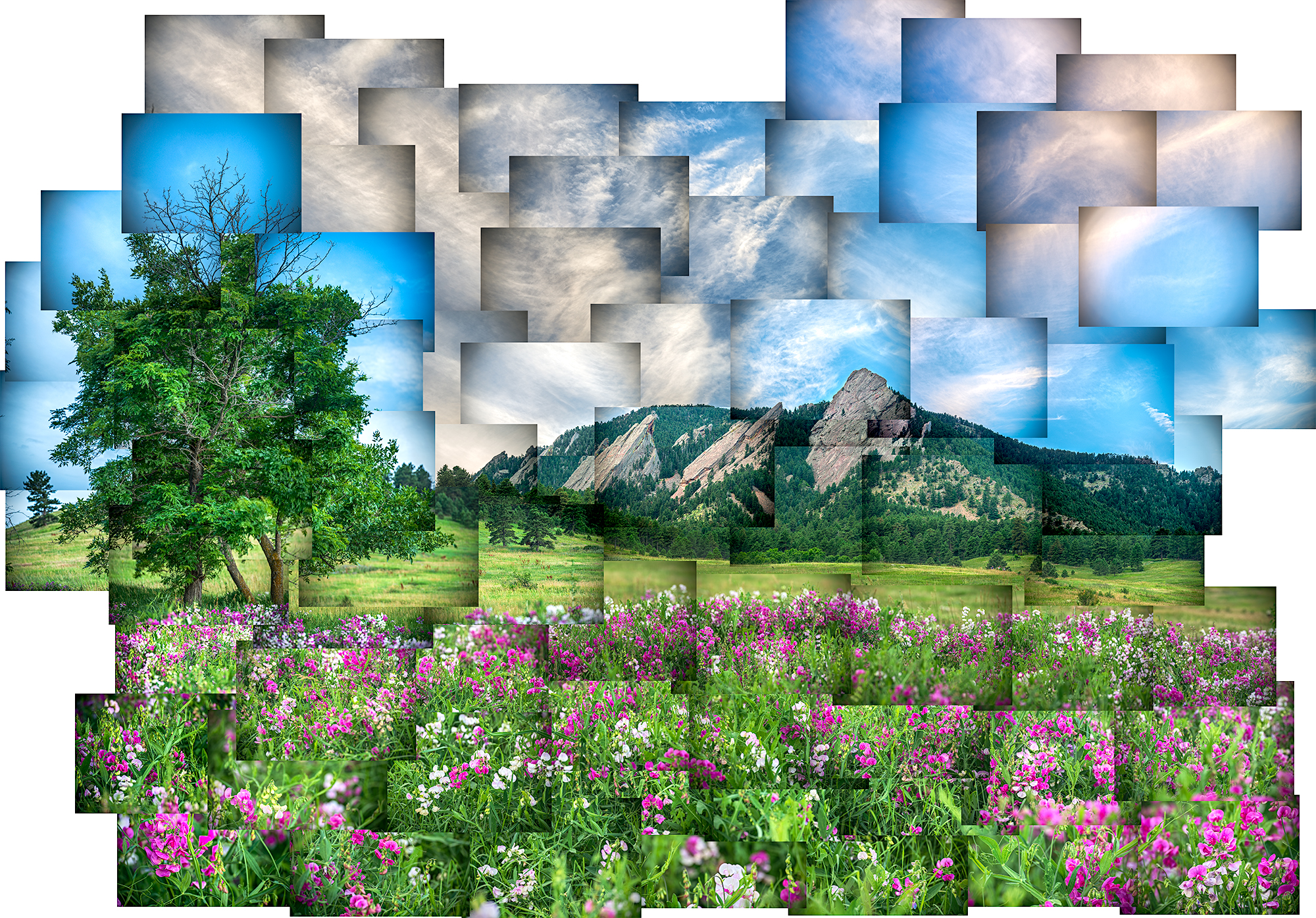 Wildflowers at the Flatirons.jpg