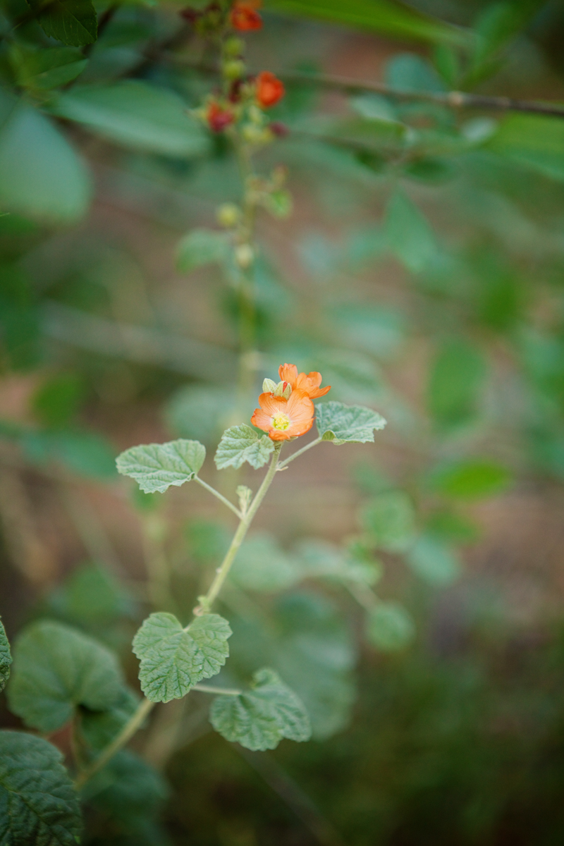 havasupai-grand-canyon-travel-blog-photography-008.jpg
