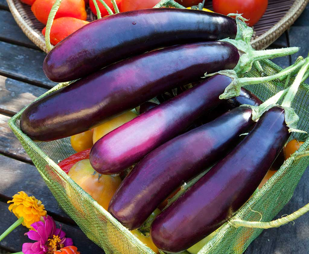 vegan-eggplant-ravioli.jpg