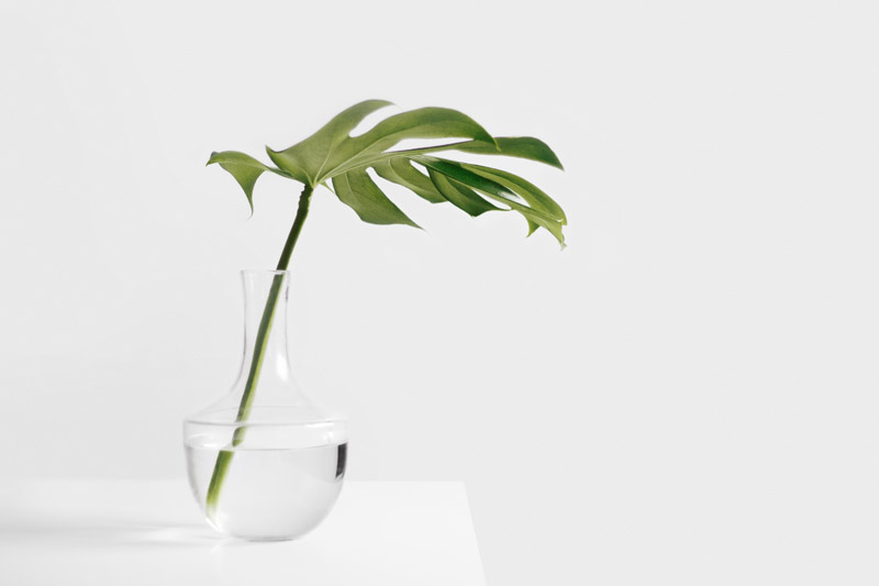 4 Lessons for the Green Entrepreneur