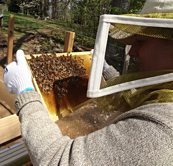 Checking the Bee Frames