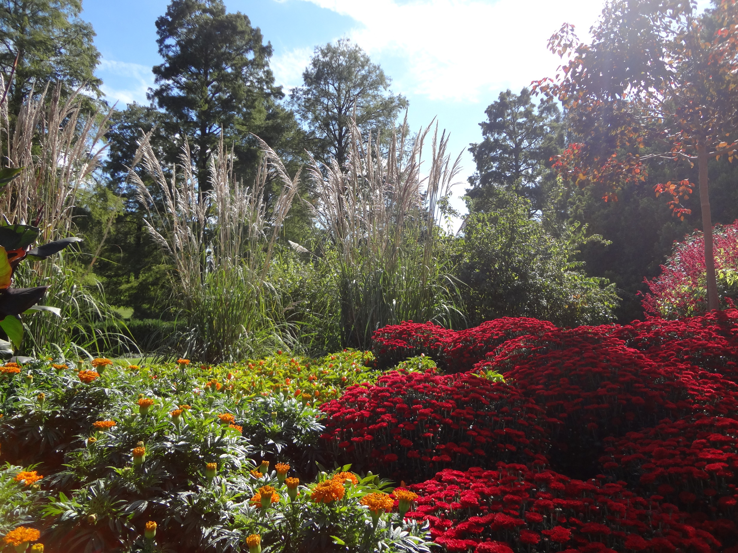 The use of the redchrysanthemums really draws the eye into this mixed bed planting at Longwood Gardens.
