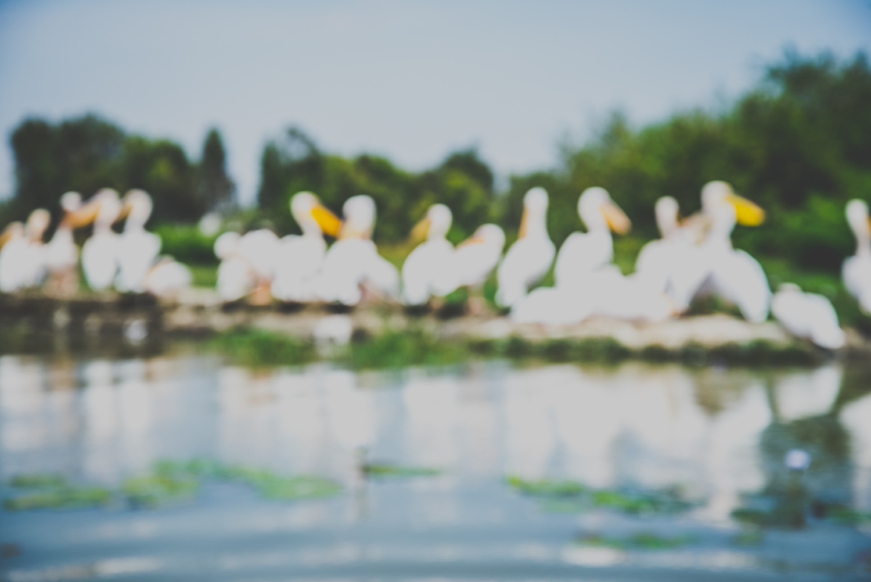 Pelikane am Lake Ziway - Äthiopien