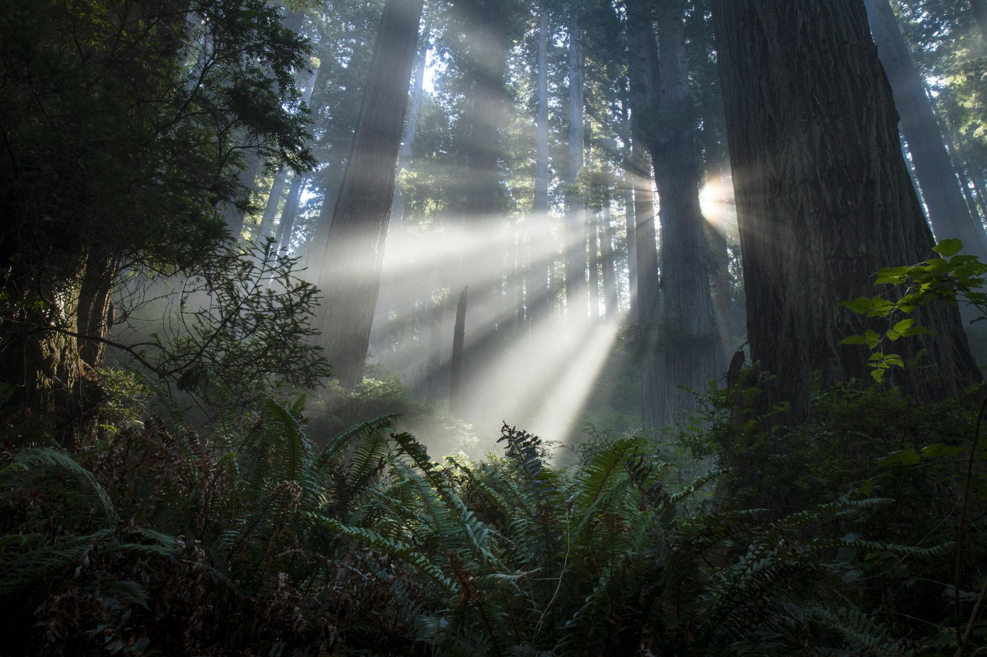 Redwood National Park  California