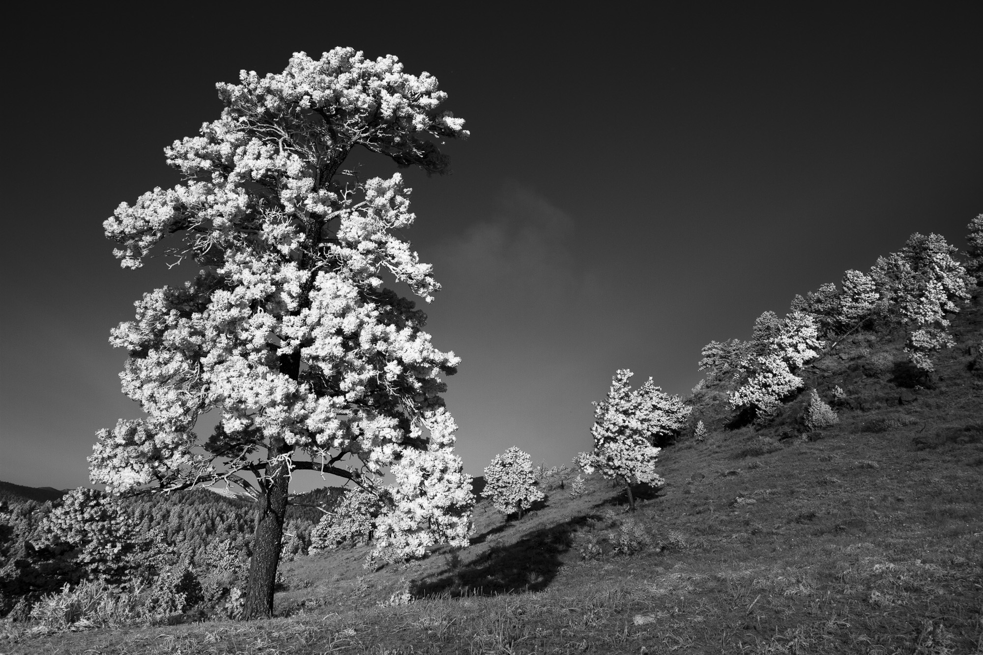 Glen Haven Frost-073.jpg