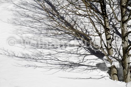 20170130-Emerald Lake Hike Snow-1085