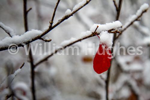 20161006-First Snow-024
