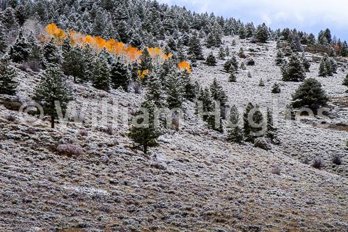20161006-First Snow-275
