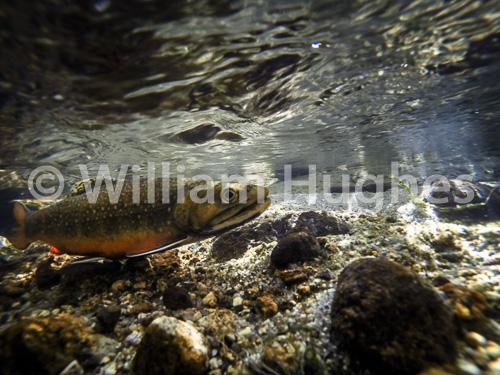 20160929-Fall RMNP Underwater-092