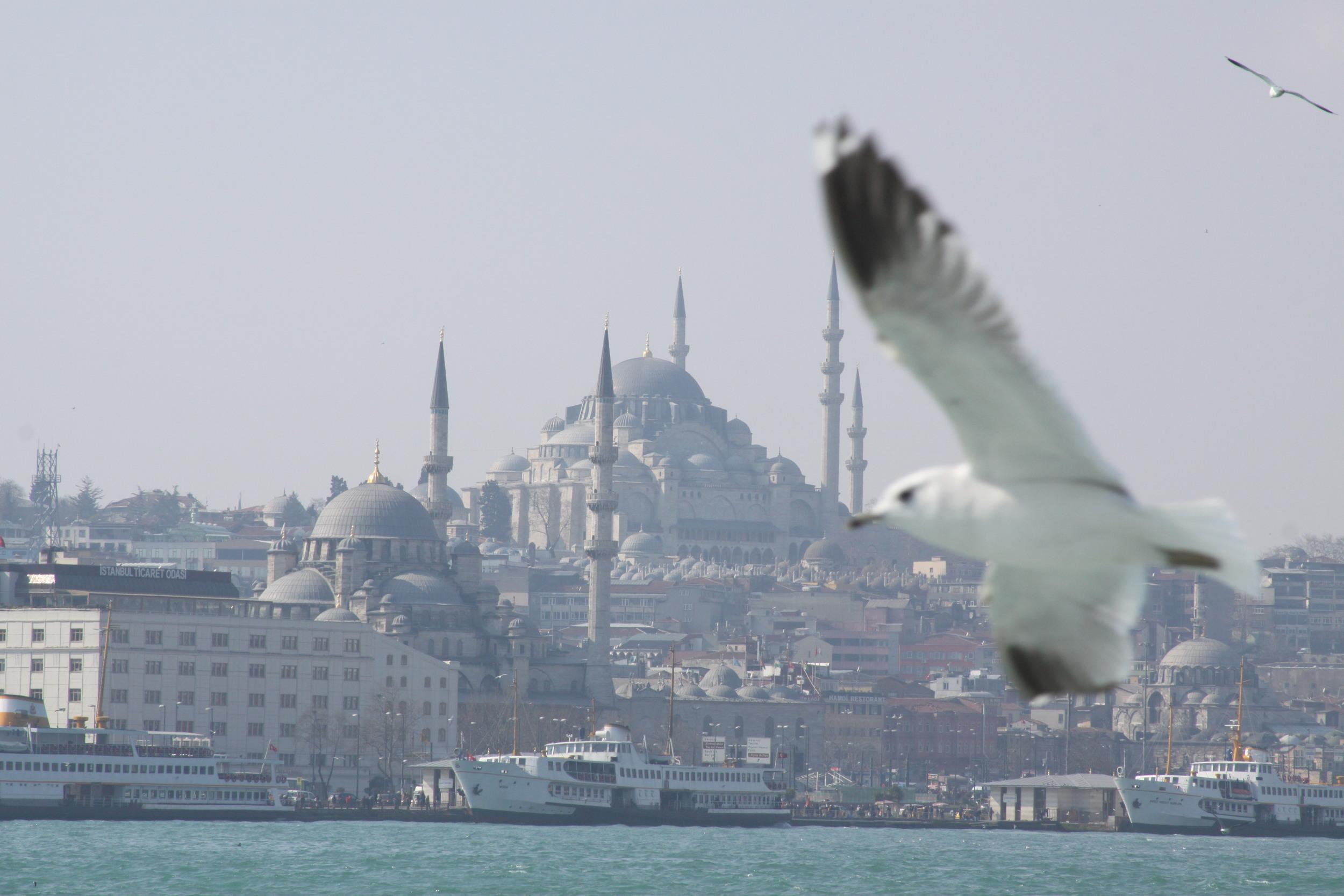Bird, Istanbul, Turkey