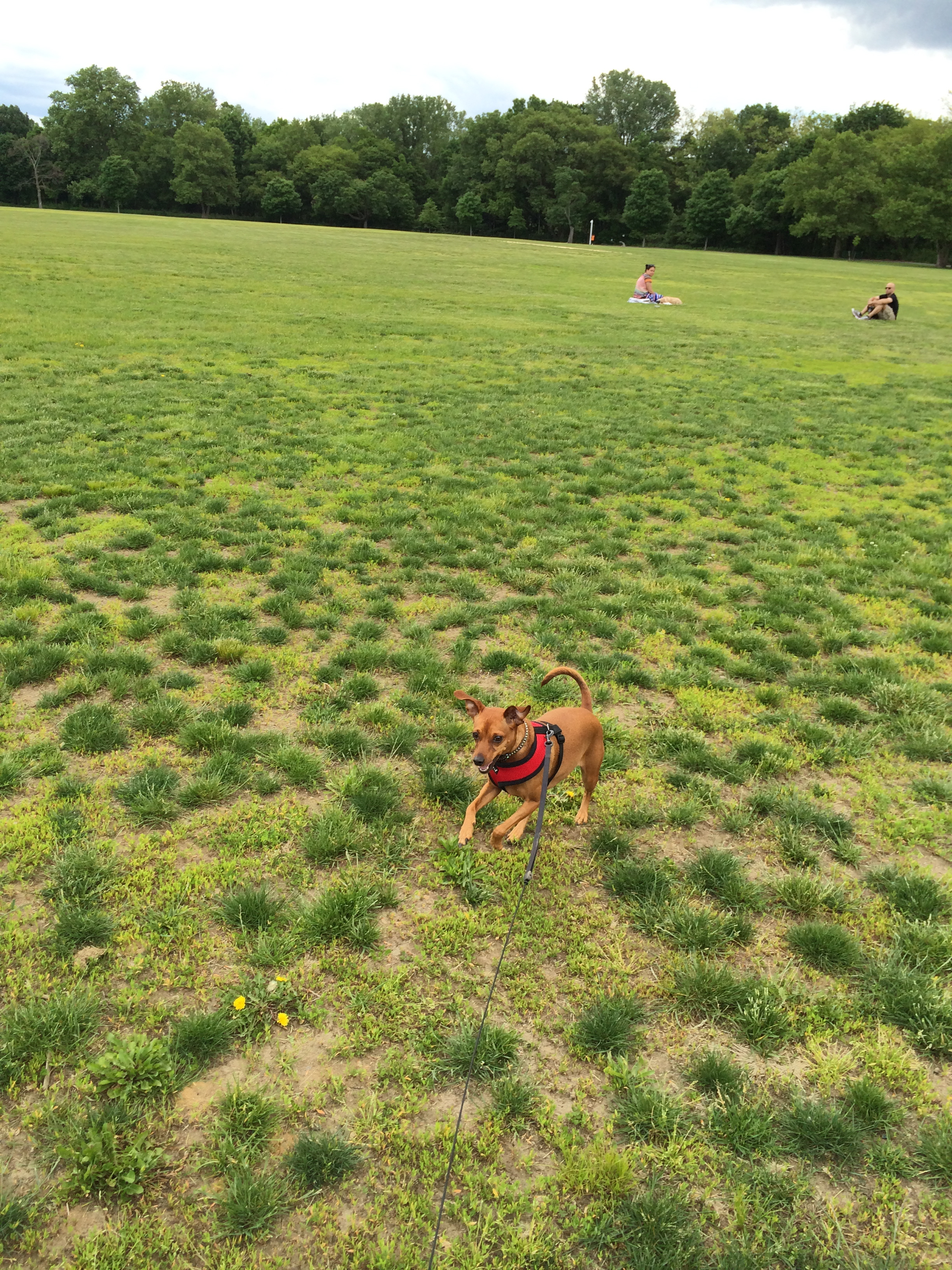 Avery happily frolicking across Parade Ground.