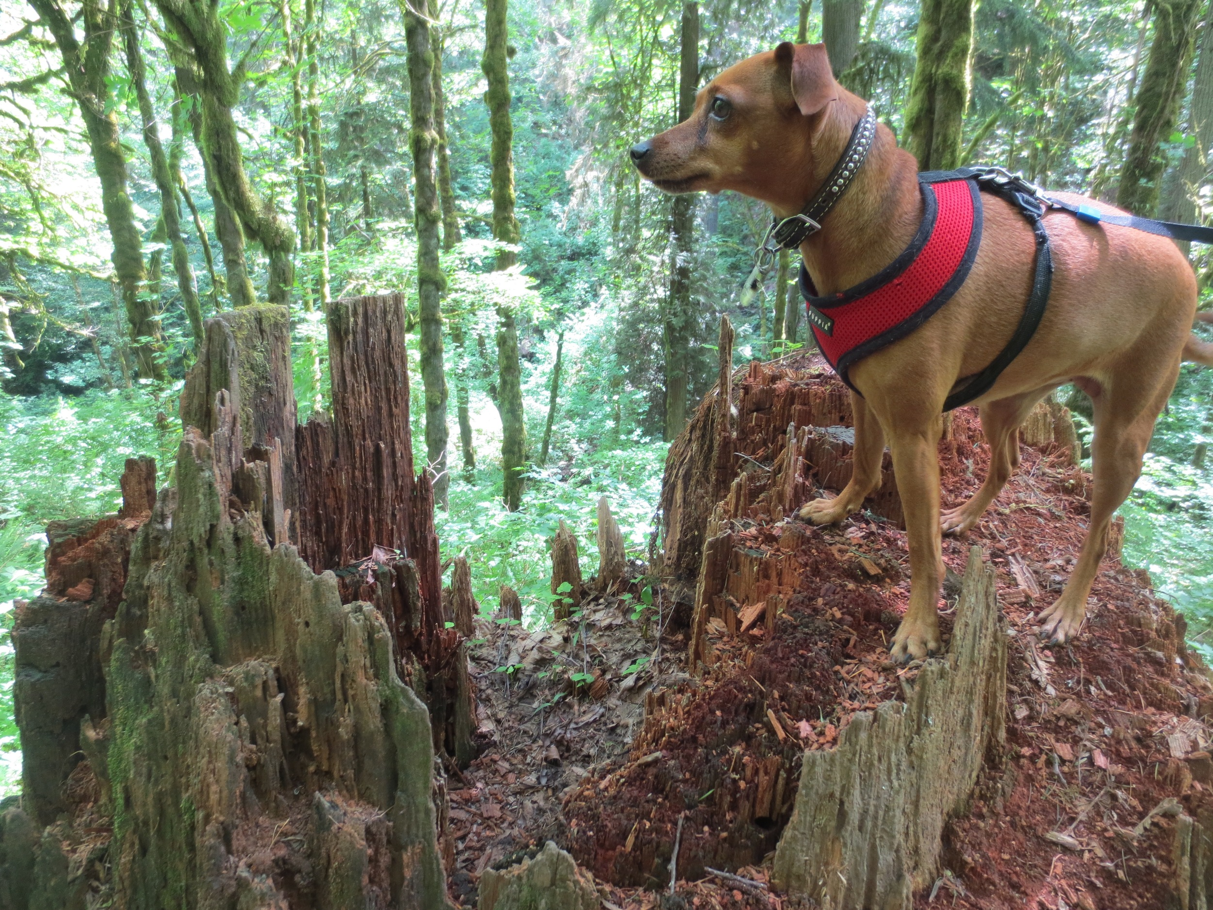 Nature dog.