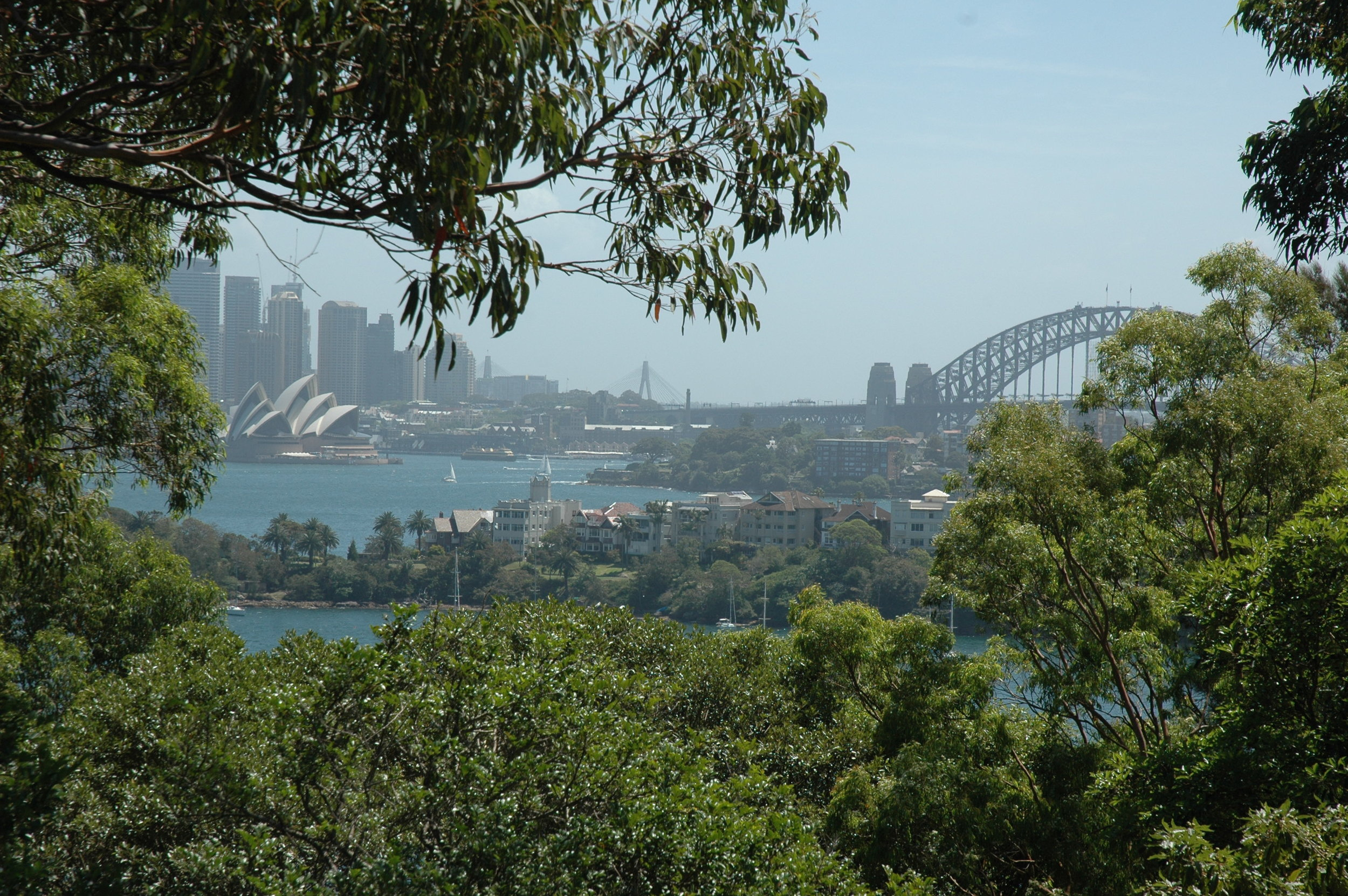 Tangara Sydney Zoo Downtown View