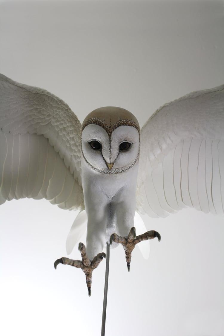 barn+owl37.jpg
