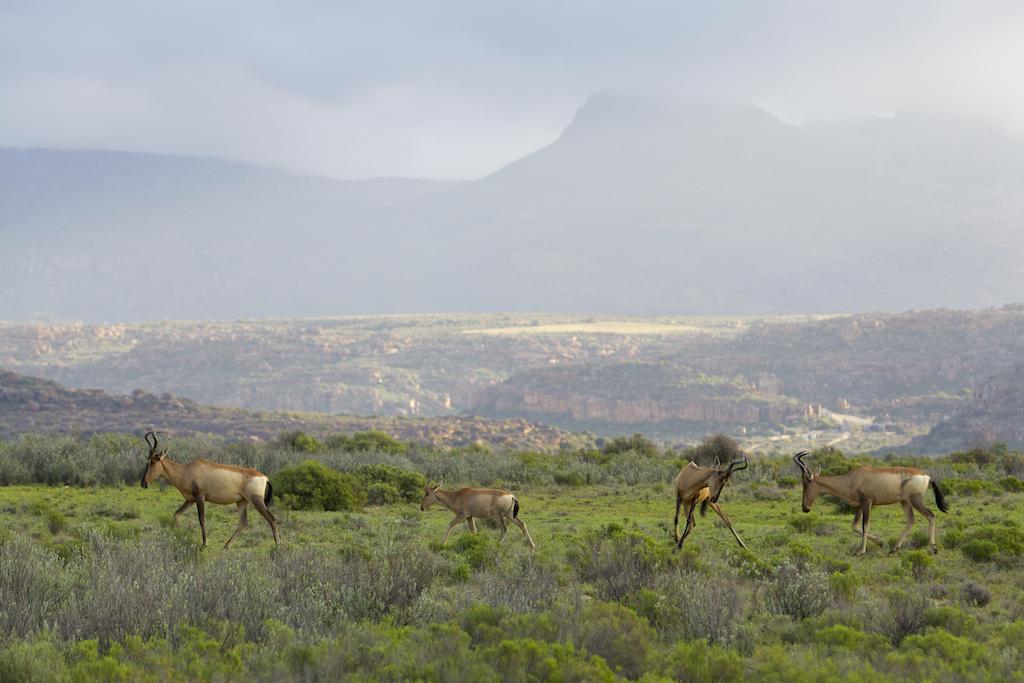 South Africa 6.jpg