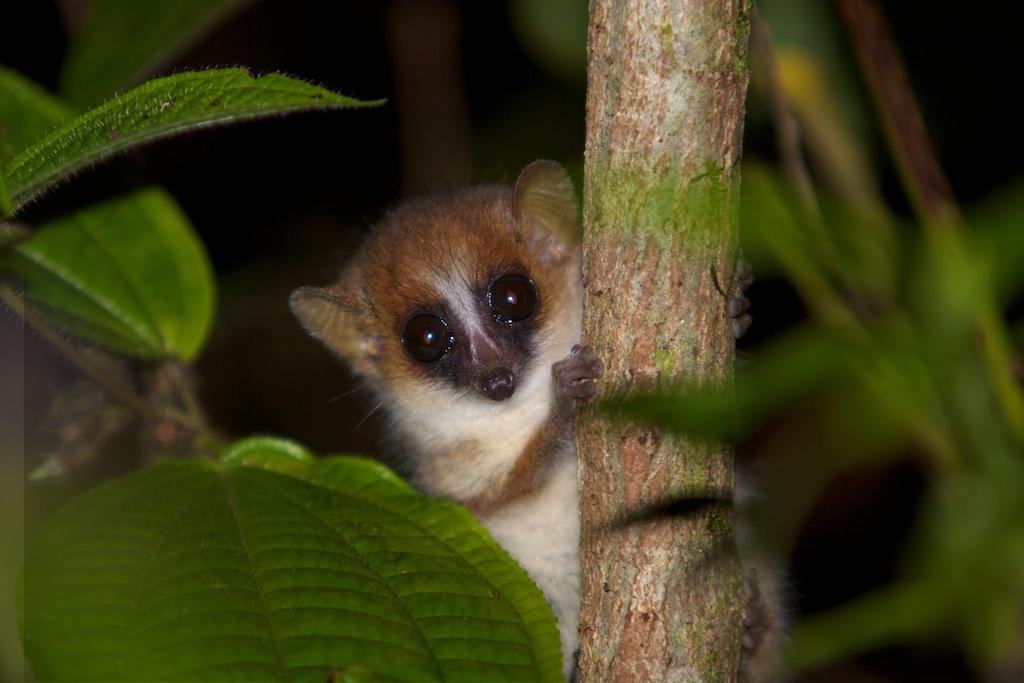 T_Steffens_Lemur 9.jpg