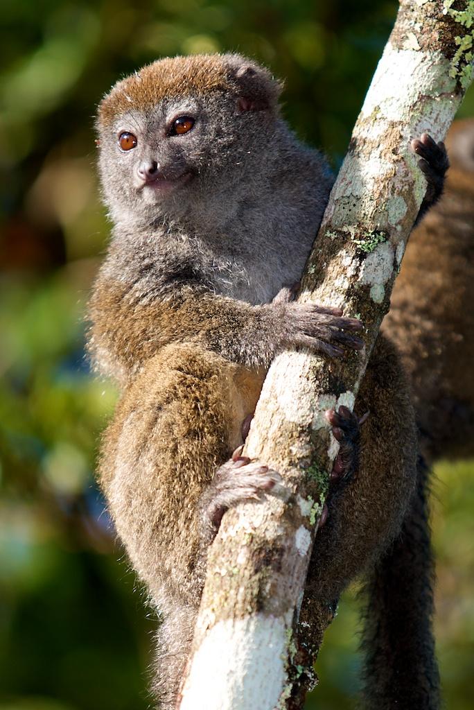 T_Steffens_Lemur 8.jpg