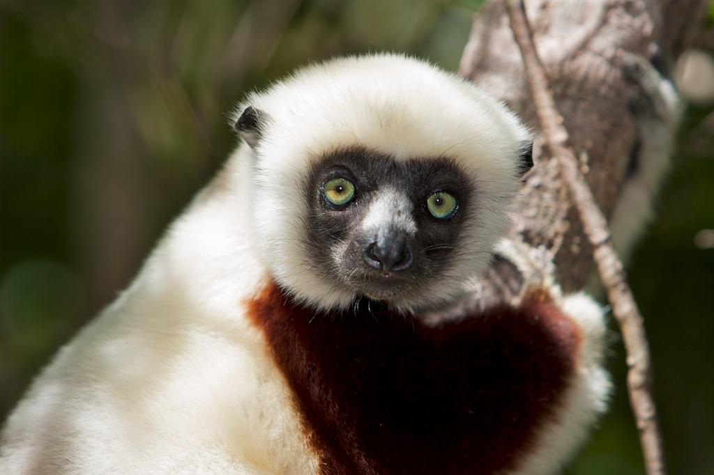 T_Steffens_Lemur 12.jpg