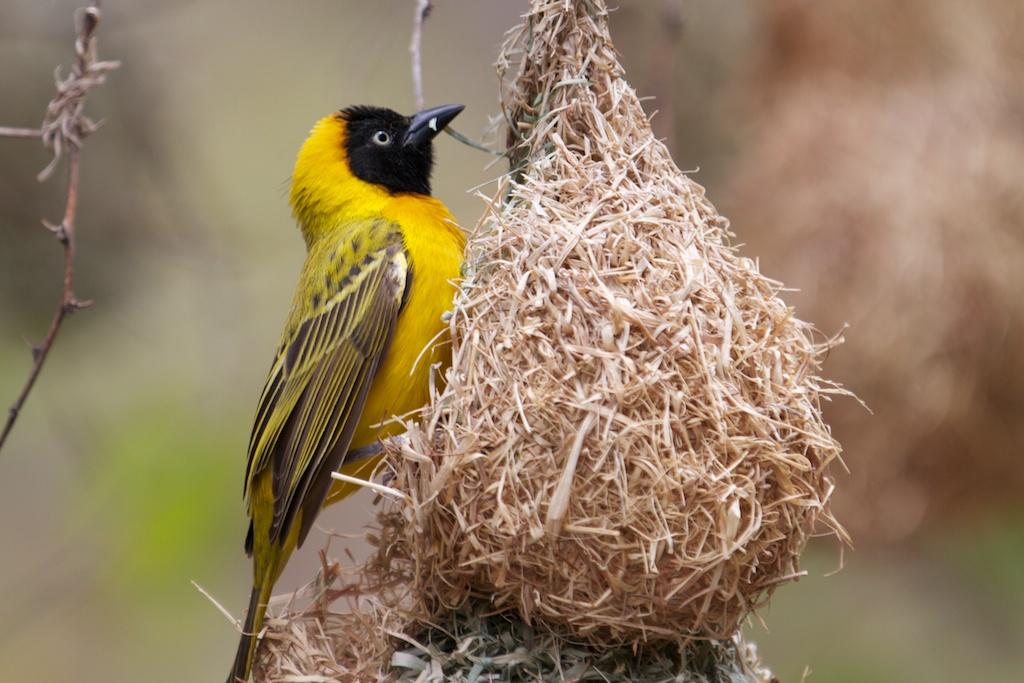T_Steffens_Birds 1.jpg